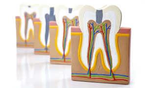 Названия и схема расположения зубов у человека