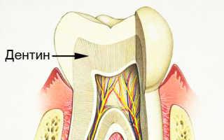 Назначение, строение и функции дентина